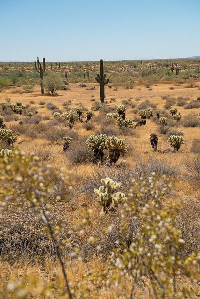 Along the Apache Wash trail of the Phoenix Sonoran Preserve