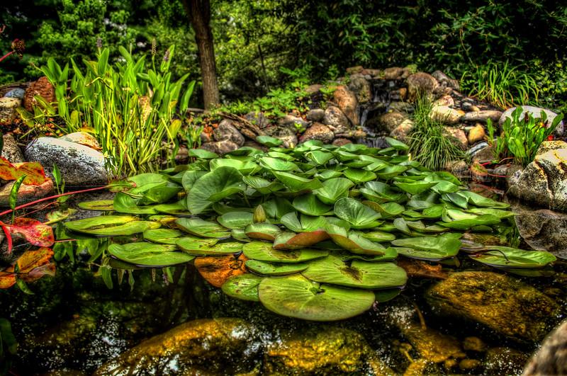 CE Pontz - Lily Pond(p).jpg