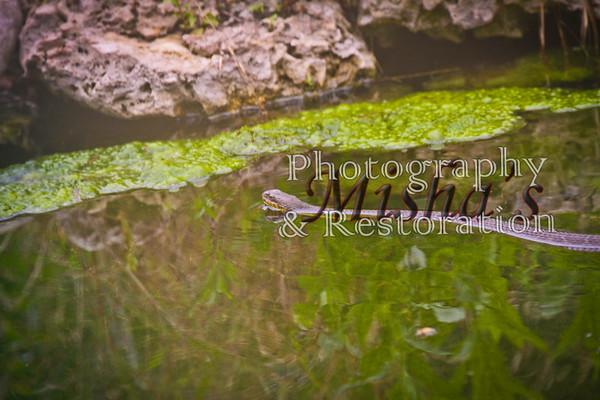 Flora Fauna and Life