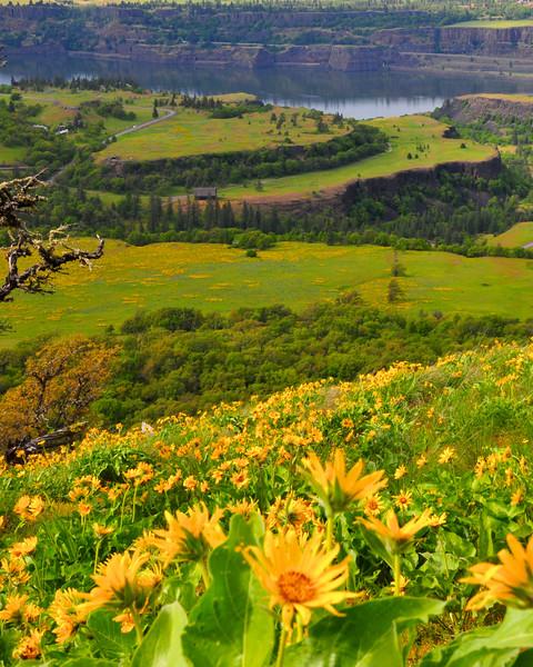 wildflowers1.jpg