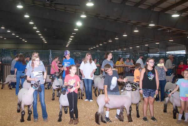 Tulsa Market Lambs Day 1