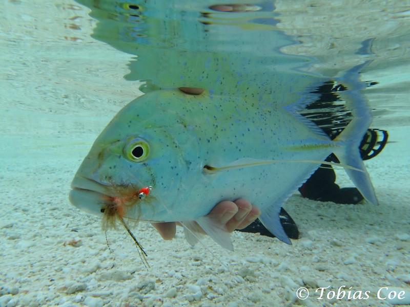 Tahiti (Anaa) (5).JPG
