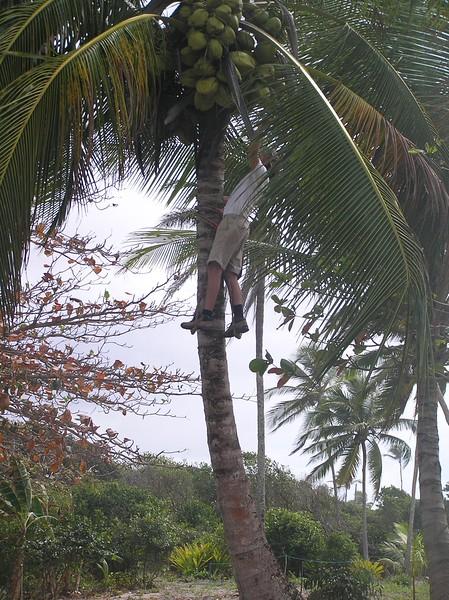 Julian picks Coconuts.JPG