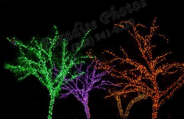Phoenix Zoolights 010513