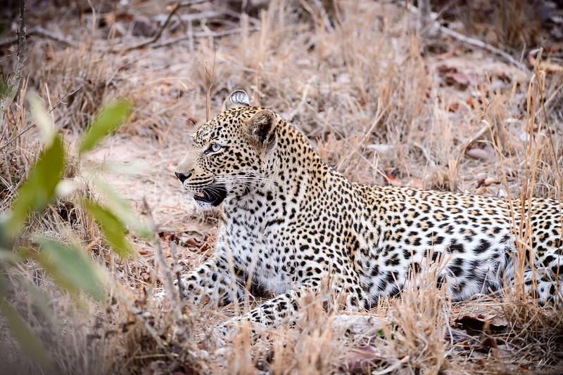 LeopardHills-20150824-0169.jpg