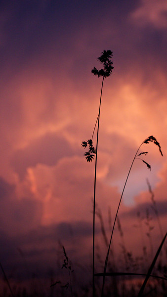 red-clouds-dawn_8777589297_o.jpg