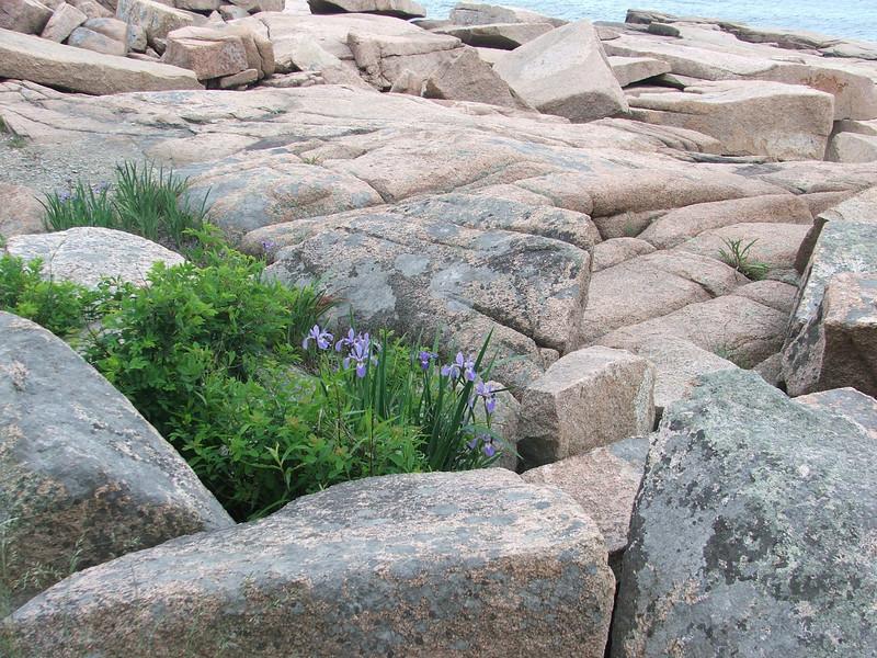 Maine 2007 086.JPG