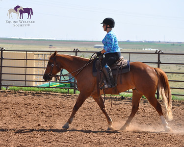 HSUS Forever Foundation: Advanced Riding Clinic