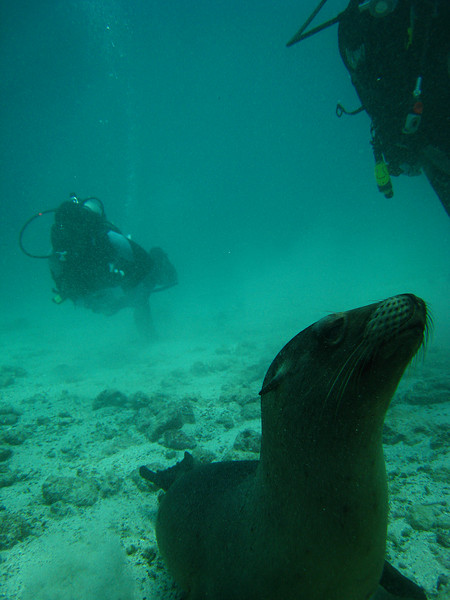 Diving in the Galapagos (294 of 392)