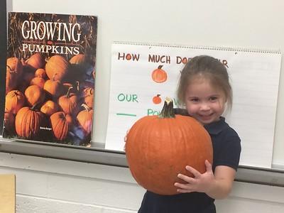 Pumpkin Exploration in PreK M
