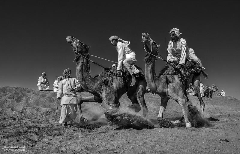 camels (20)- B&W.jpg