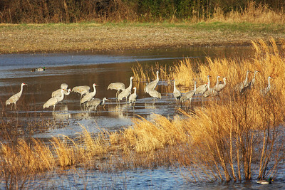 Wheeler National Wildlife Refuge