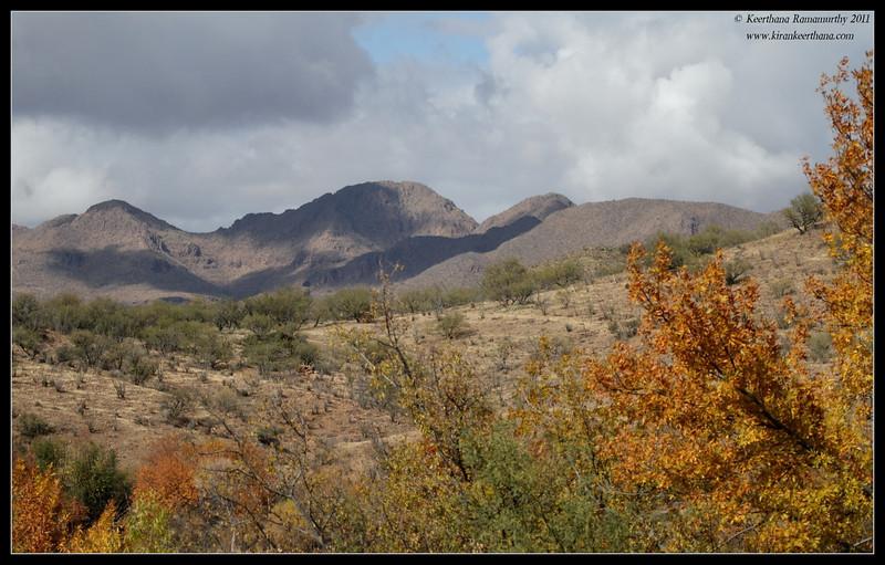 View along the road to Patagonia Lake, Arizona, November 2011