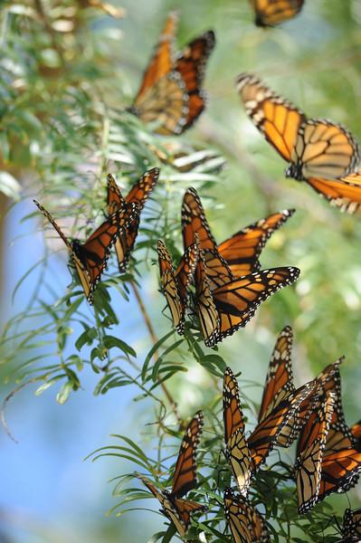 20111019_Nature_096.jpg