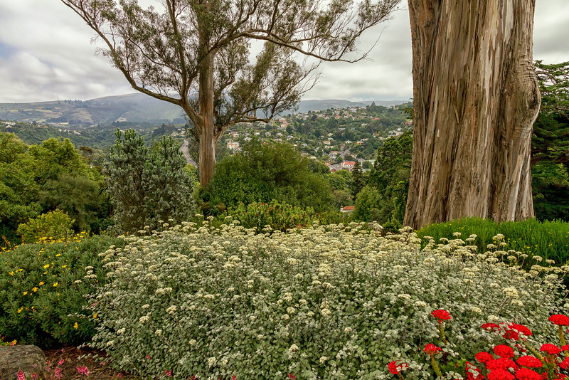 Dunedin from the Botanic Garden