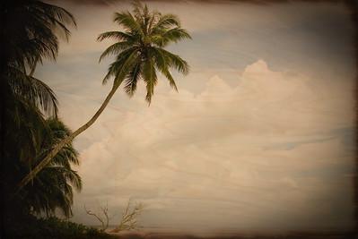 Indo Palm