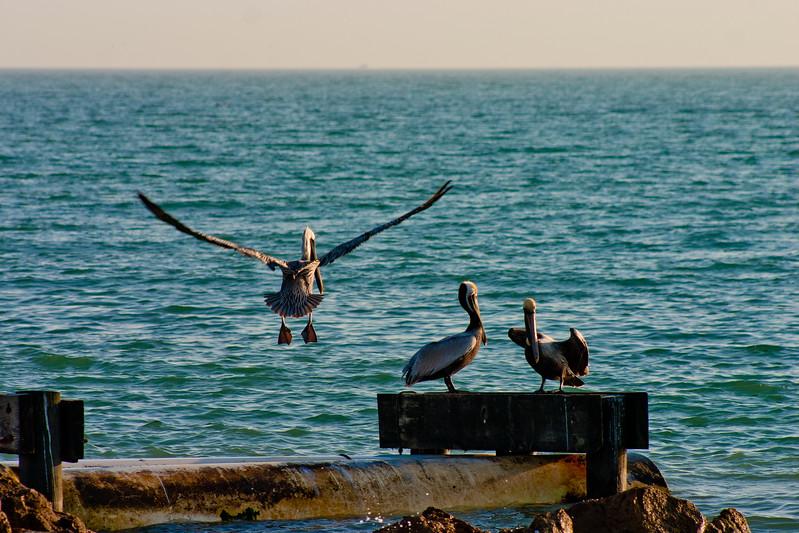 Pelican Landing in Florida