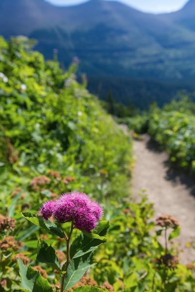Lonely Purple.jpg