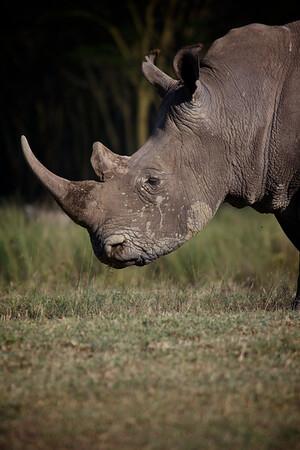 Nakuru National Park 2013