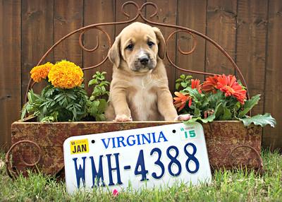 Jerica Pups Spring 2016