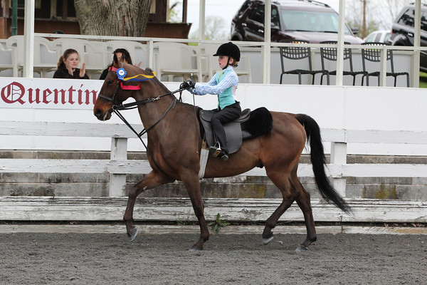 082 Academy Walk-Trot Equitation Championship All Ages