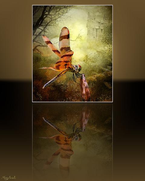 Enchantedforestononereflection-copy.jpg