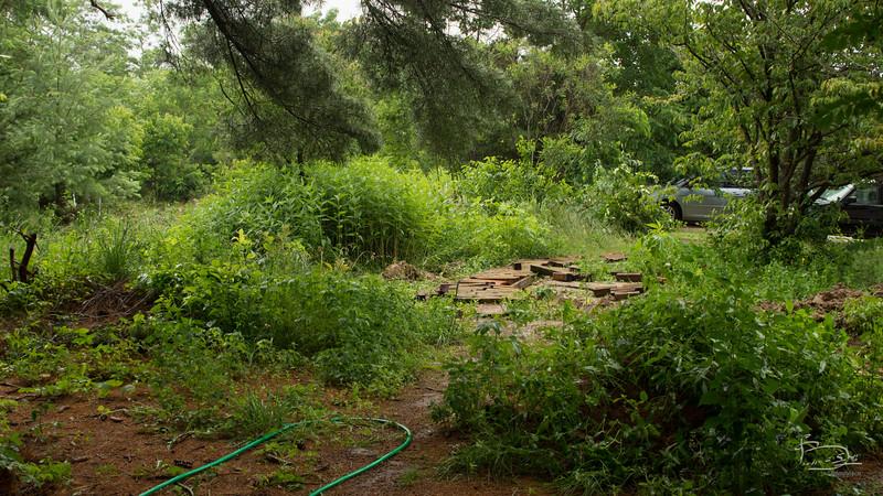 garden path disruption