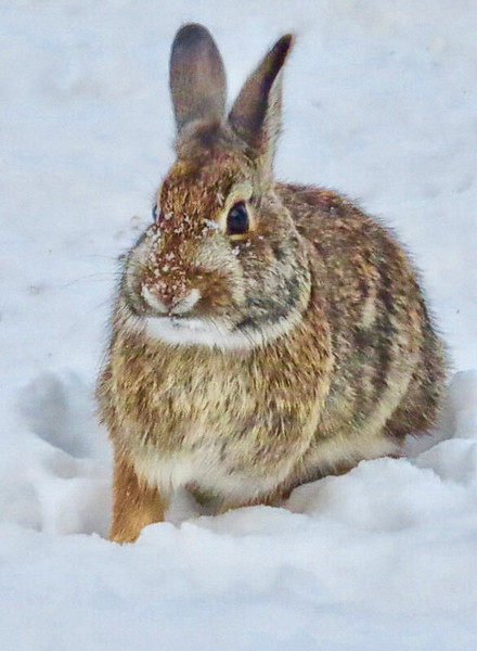 rabbit three.jpg