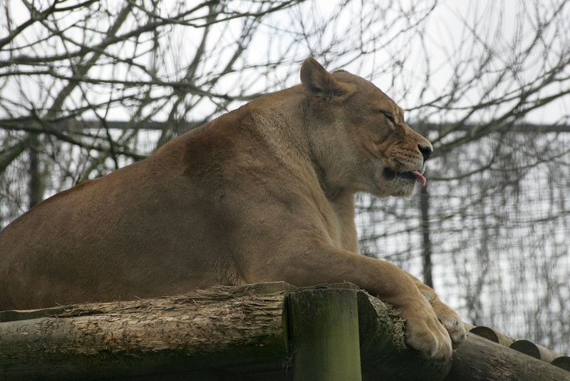 Newquay Zoo 315.jpg