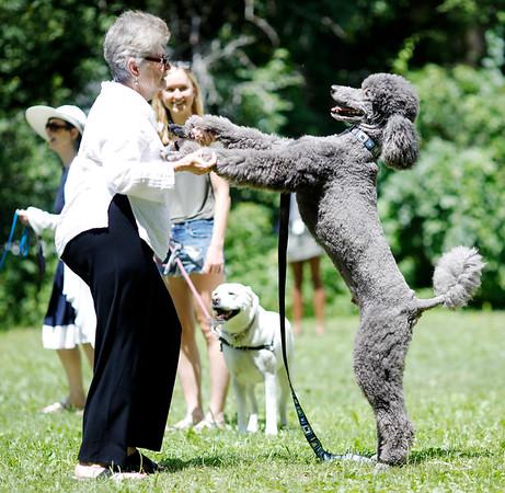 Jacob's Pillow Dog Dance-071319