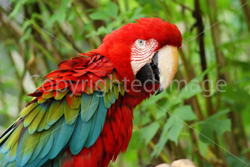 #28 Parrot.JPG
