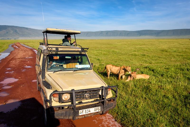 Lions Ngorongoro.jpg