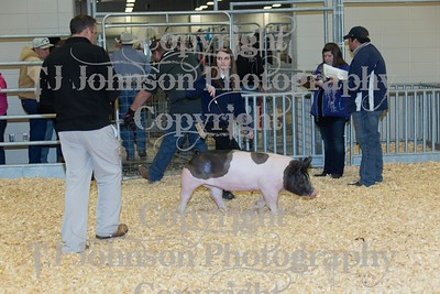 2016 KISD Swine Class 2