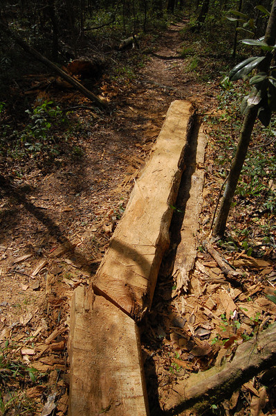 That's the log I'd levered off the trail a couple days ago.