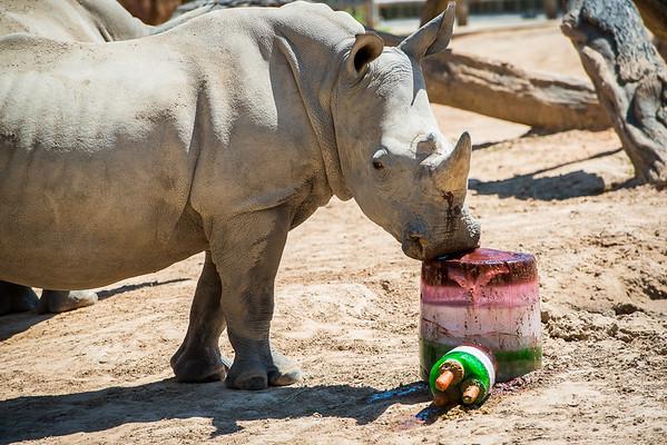 Happy Cinco de Rhino - Mumbles 3rd Birthday - 5/4/14