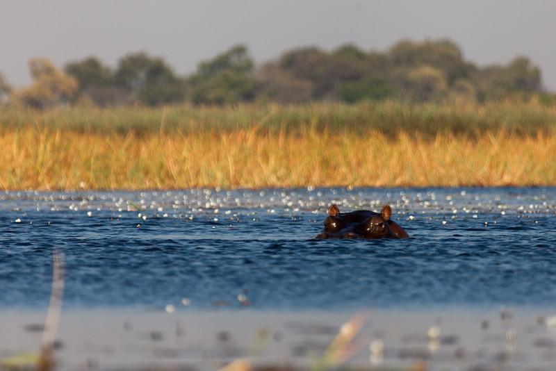 Botswana-63.jpg