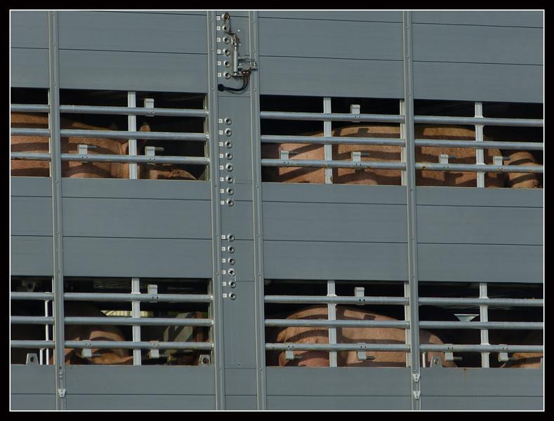 2012GL Lucerna 04.jpg