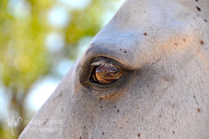 EB&Horses-054.jpg