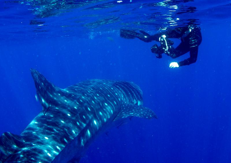 2014 Whale Shark - Cave Adventure-3.jpg