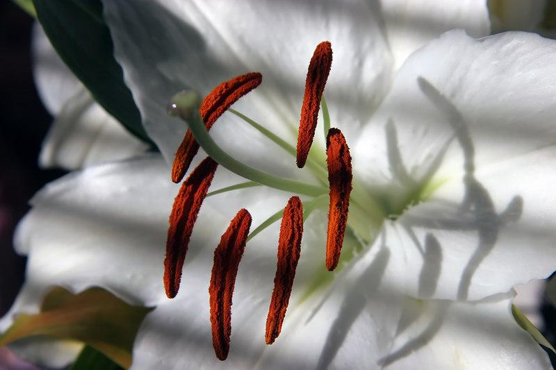 Orchid 5.jpg