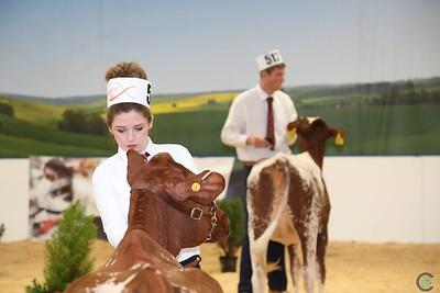ABAB Dairy Shorthorn
