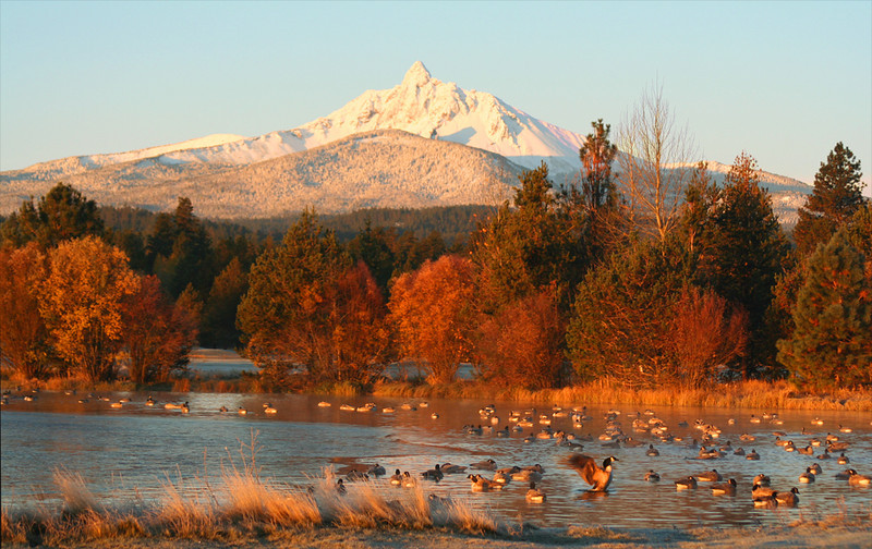 fall mt w geese 110805 IMG_1256b.jpg