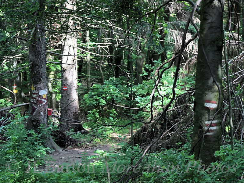 Vienna really Woods Buchberg between Hadersdorf and Purkersdorf.  Note the self-stamp box for recording your presence