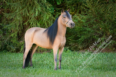 Mini Horse Farm (October)