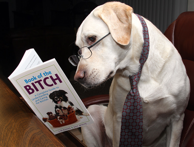 Book Of The Bitch.jpg