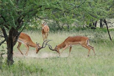 1494239976African-Safari-58.jpg