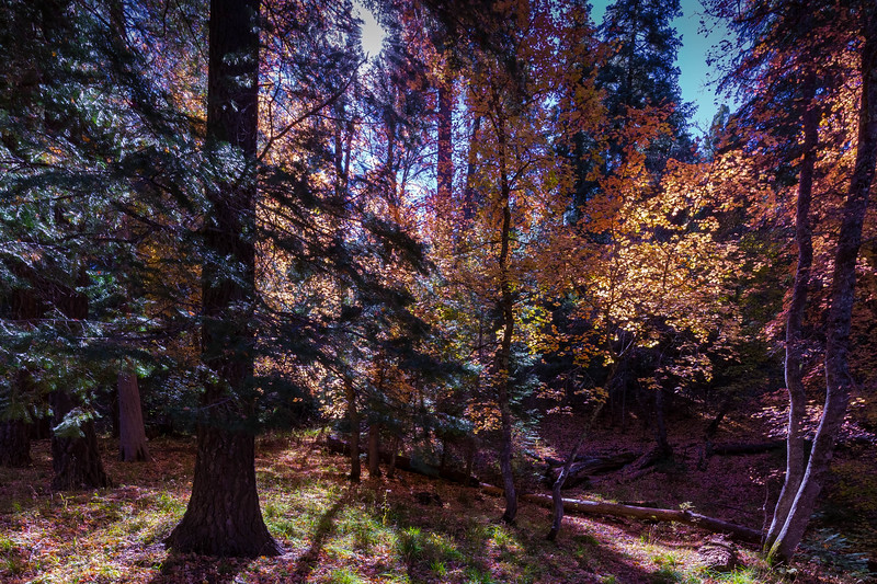 Mt Lemmon Colors 10-23-2017a.jpg