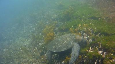 Underwater Turtle Feeding