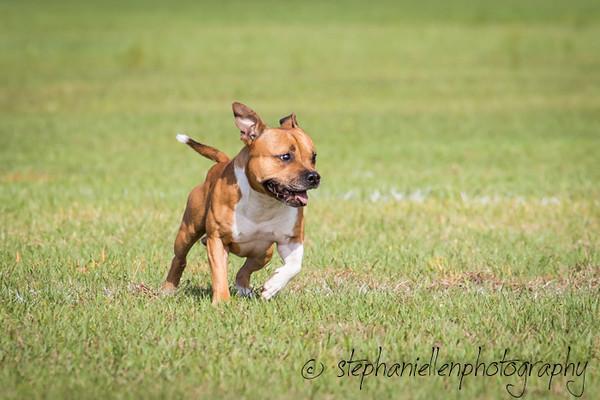 _MG_2582Up_dog_International_2016_StephaniellenPhotography.jpg