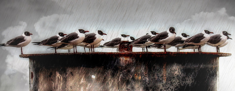 Birds of the Coast